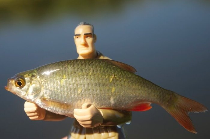Coarse_Fishing_beginners_ - 2