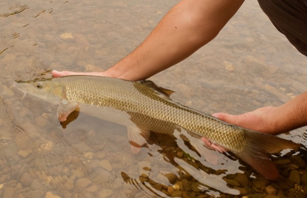 River_Fishing_For_Beginners - 2 (1)